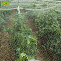 WCIC Polyethylene Bird Preventing Netting Anti Bird Net Crop Fruit Pond Protection Mesh Greenhouse Garden Vegetable Pest Control