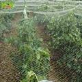 WCIC Polyethylene Bird Preventing Netting Anti Bird Net Crop Fruit Pond Protection Mesh Greenhouse Garden Vegetable Pest Control
