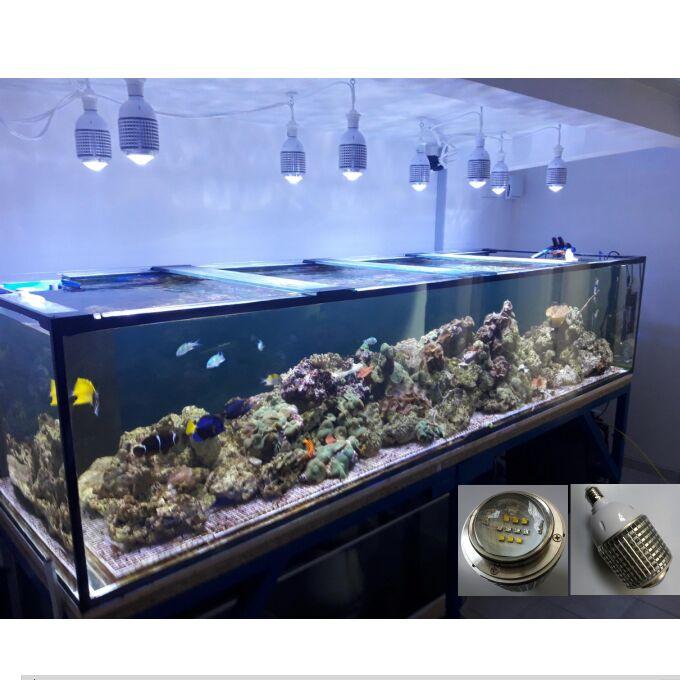 Ampoule d'usine d'éclairage de lumière LED d'aquarium de récif de LED de CREE de la puissance élevée 30 W pour l'alage marin de récif de corail de poissons SPS LPS