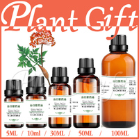 100% pure plant Herbal medicine oilsChinese Angelica herbal oil Essential oils traditional Chinese Angelica sinensis