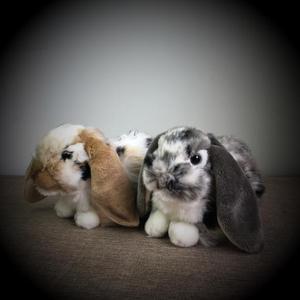 Original Cute Rabbit Holland L