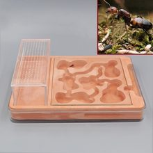 Hybrid Nest Ants Farm Ant Formicarium Box Acrylic Plaster Combo Ant Colony Small Pet Cages(China)