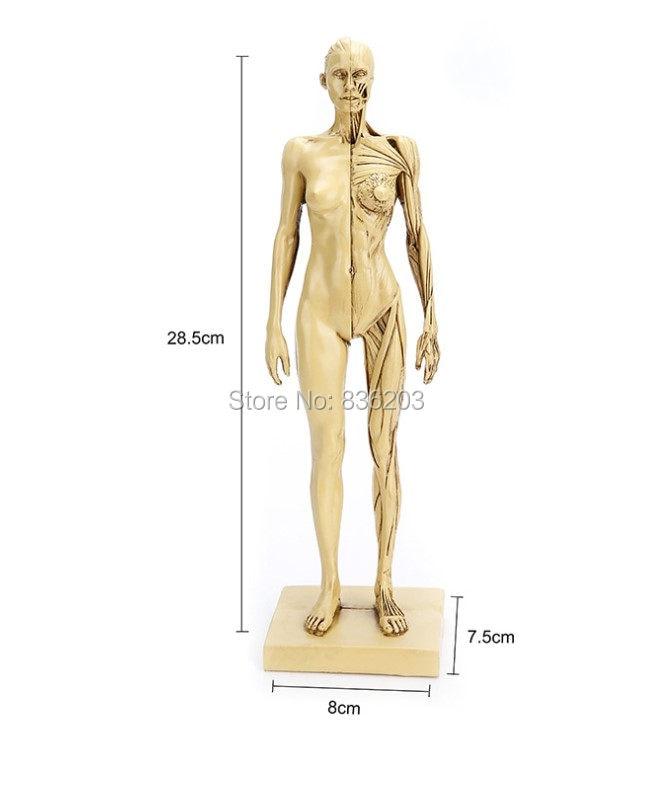 Online-Shop 30 cm Menschmodell für Männer PU haut grau skeleton ...