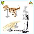 Г-н Froger Кости и Окаменелости Строительные Блоки Модели Человеческого Скелета Тираннозавра T-REX Plesiosaur Plesiosaur Классические Игрушки симпатичные