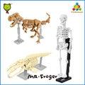 Mr. Froger Huesos y Fósiles Bloques de Construcción Modelo de Esqueleto Humano Tyrannosaurus Rex T-REX Plesiosaurio Plesiosaurio Juguetes Clásicos lindos