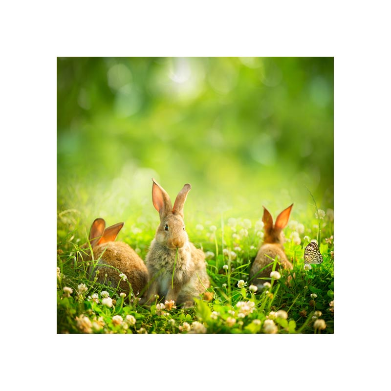 Thin fabric computer Printed photography background Newborn Easter Lovely rabbit photo backdrop for Studio 5X5ft GE-138