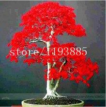 20pcs/bag  japanese red maple tree seeds  Bonsai tree seeds. rare red maple seed. Balcony plants for home garden