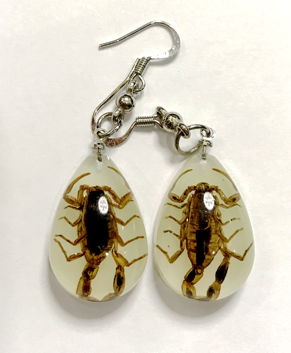YQTDMY Earrings Drop-Entomology Dangle Fashion Natural-Scorpion Real-Insect-Newest