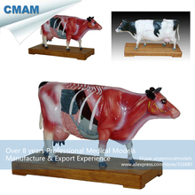 CMAM-A08 Cattle Acupuncture Anatomical Model,Animal Acupuncture Models