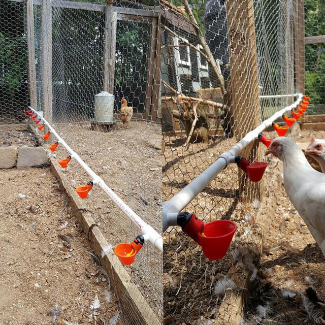 30 Pcs Poultry Feeding Chicken Quail Automatic Drinking