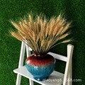 Ventas directas de la fábrica de campos de trigo natural de flores secas secas de trigo cebada planta película de arte apoyos flores vivas 100 unids/pack