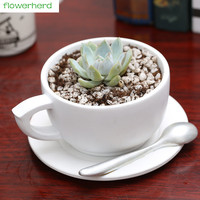 Flowerpot Cute Model Resin coffee cup shape Succulent plant pots new Flower Pots & Planters