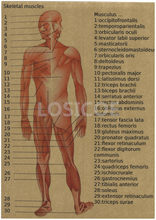 Vintage Medicine Human anatomy Posters Kraft Paper Painting Wall Sticker Print Art Hospital Classrooms Interior Decoration A2(China)