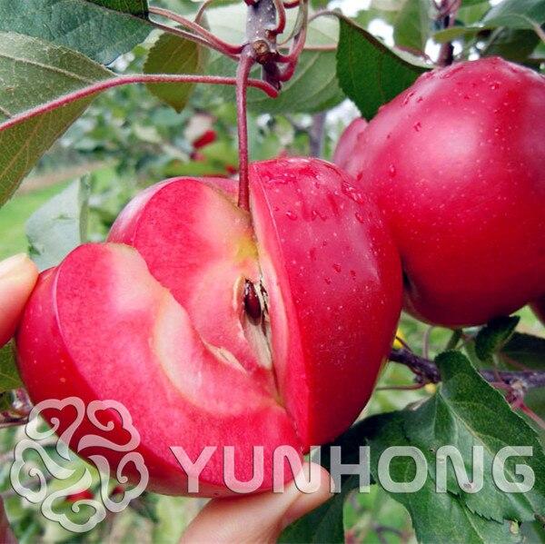 50 unids/pack fruta de manzana roja amor carne roja frutas en maceta árbol bonsái se puede plantar bonsái jardín maceta plantadores perenne planta