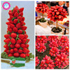 300pcs rare bonsai Strawberry tree fruit plants Delicious and edible fruit perennial indoor potted plants for home garden plants