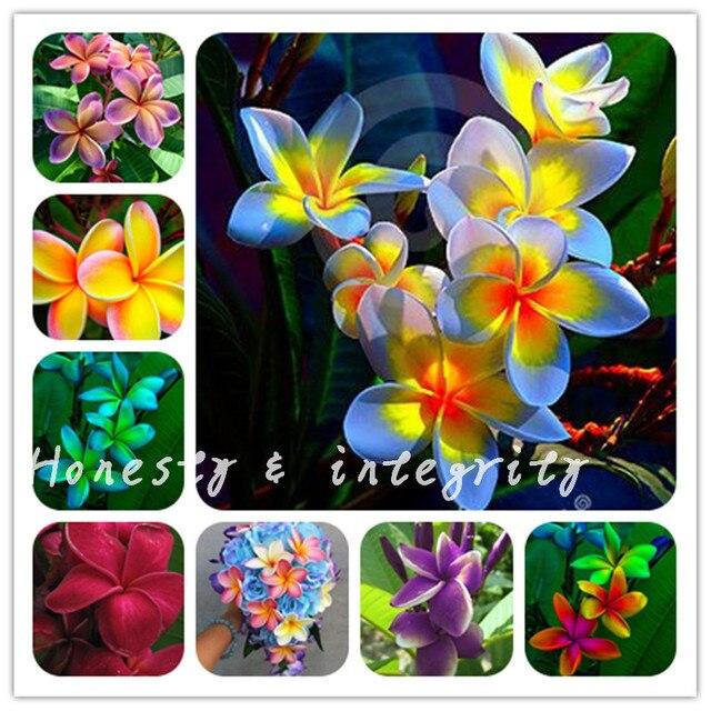 100 piezas colorido Plumeria Hawaiano espuma Frangipani flor Bonsai estilo japonés flor para la decoración del Partido de la boda Romance