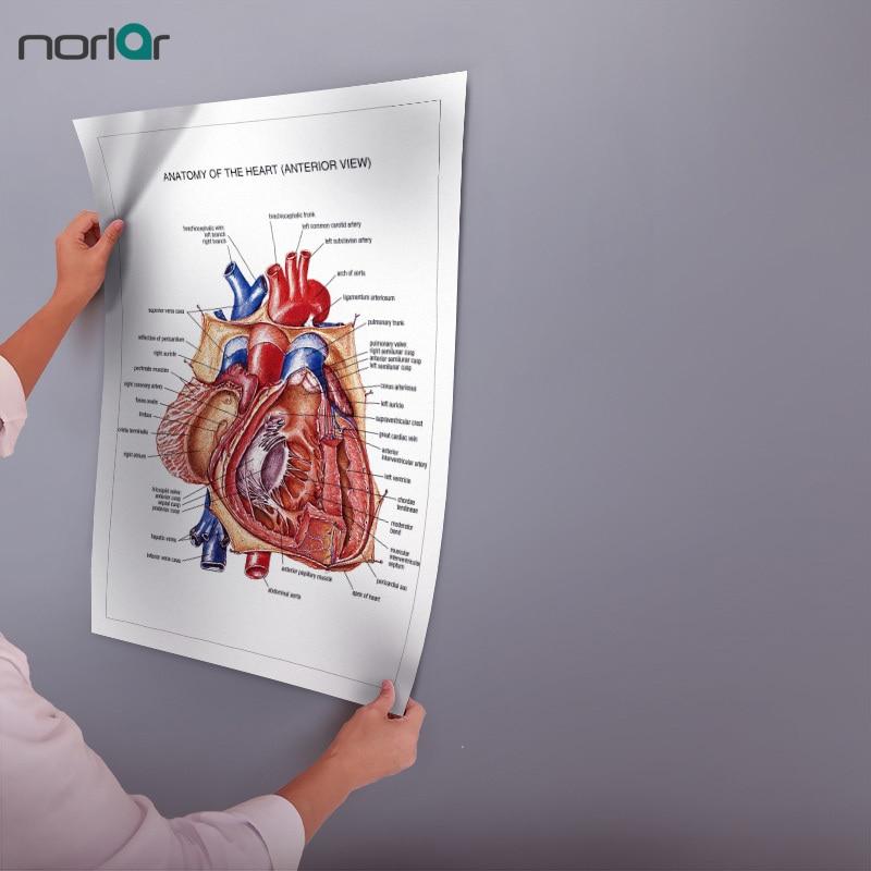 Cercevesiz Tuval Boyama Kalp Anatomisi Sanat Posterleri Duvar