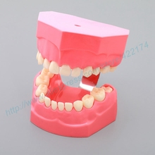 Free shipping child learning model dental tooth teeth dentist model for teaching study odontologia