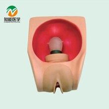 BIX-F9B Medical Skill Gynecology Practice Simulator Female Contraception Training Model  G170