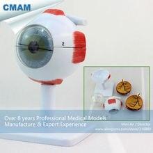 CMAM-EYE02  Medical Anatomy Model 3x Life-size 6-parts Eyes Anatomical Model, Ear-Eye-Nose-Throat Models > Eye Models