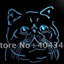 LB986-экзотическая короткошерстная кошка, порода домашних животных, световая вывеска для домашнего декора
