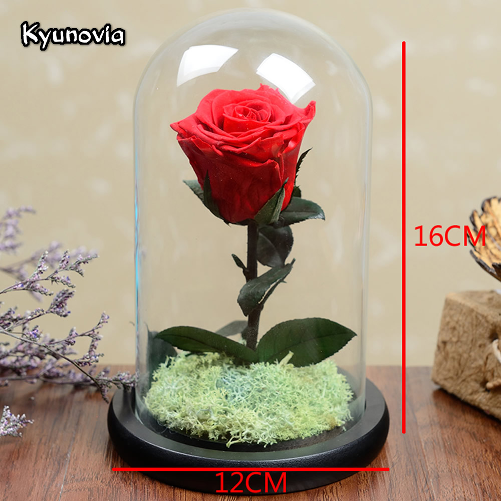 Kyunovia valentines day birthday gift real red rose flower fresh kyunovia valentines day birthday gift real red rose flower fresh preserved roses home decoration little prince rose ky107 in artificial dried flowers izmirmasajfo