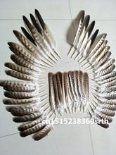 Conjunto de plumas de águila naturales de alta calidad, 20 33cm/8 14 pulgadas, diy, puesta en escena, joyería artesanal, decoración, colección