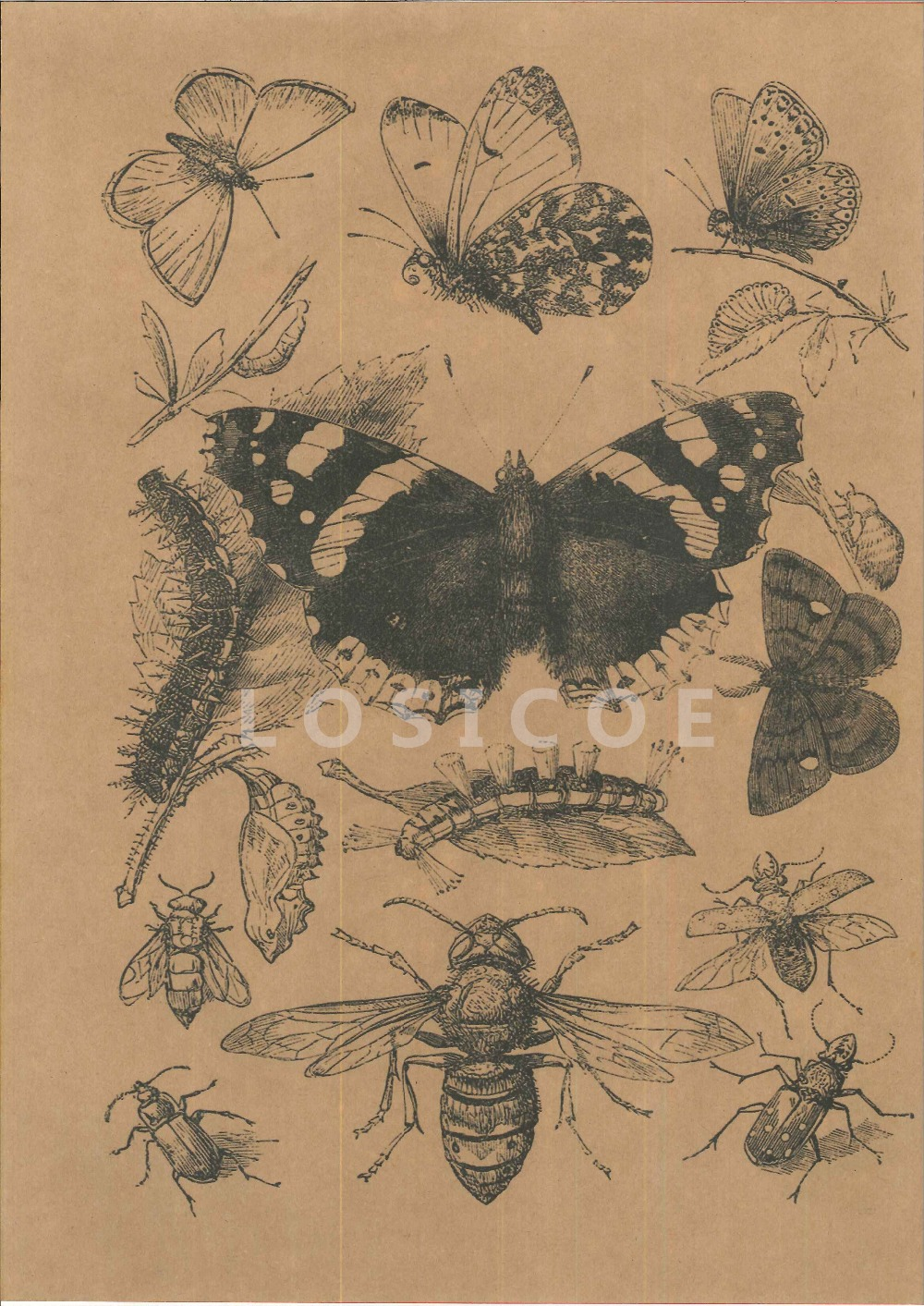 High Definition Retro Insect Science Science Tattoos