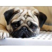 5dDIY Diamond Embroidery,Animal Dog Pug Small pets round  Painting, square Cross Stitch Mosaic,Needlework,v72