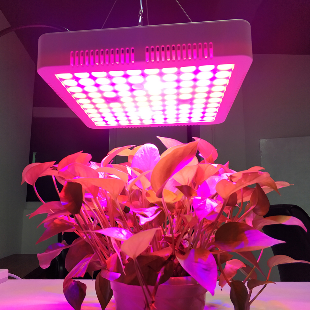 LED Grow Light Full Spectrum Indoor Lamp for Indoor Gardening Flower Plants Growing 100PCS LED Lights US/UK/EU/AU/ Plug 1000W