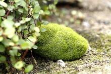 3 pcs Hot Sale Green Artificial Moss Decorative Crafts Home Ornament Bonsai Succulent Gnomes Micro Landscape Decoration