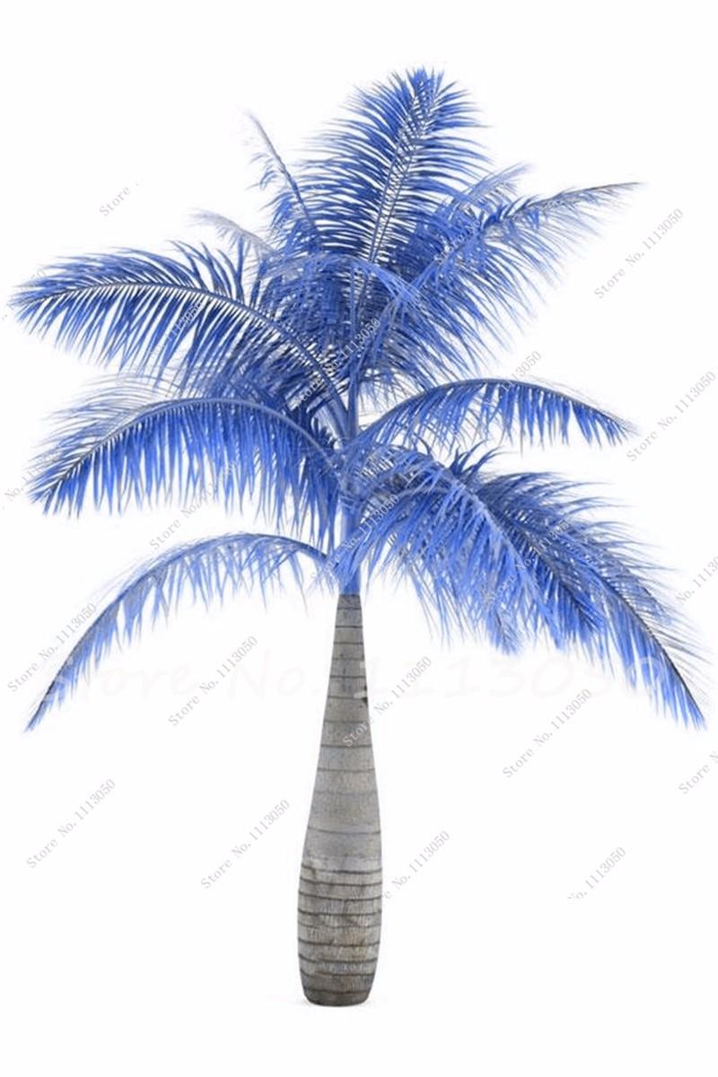 palm14