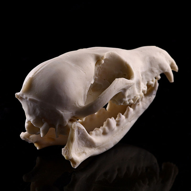 Resin Craft Animal Skull Sculpture