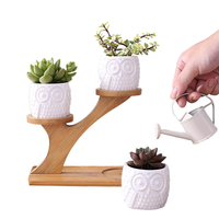 3 Pack Owl Ceramic Succulent Plant Pots with Bamboo Tray