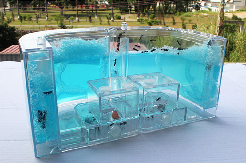 Acrylic Ants Farm Ants House Castle Colorful Insects Terrarium Ant Cage Insects Box Nursery Ecological Kid Educational Model Toy11
