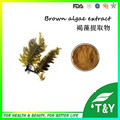 High quality Brown Algae Extract, Pure Natural 10:1 Fucoidan 600g/lot with free shipping