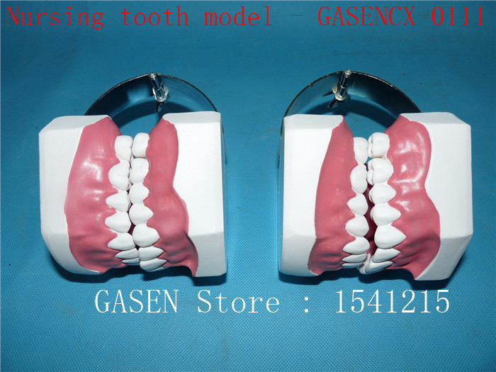 Oral care model Tooth model Teaching model Dental teaching model Medical teaching aids Nursing tooth model - GASENCX-0111 shunzaor dog ear lesion anatomical model animal model animal veterinary science medical teaching aids medical research model