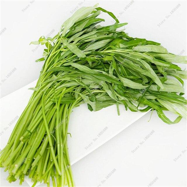 Aliexpresscom Buy New Arrival Vegetable Garden Seeds Spinach