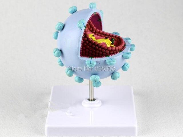 Online Shop Enlarged HIV Anatomical AIDS-Virus Model Medical ...