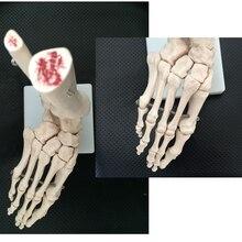 BIX-A1018 Foot Joint Model (Life-Size Skeleton ) WBW008