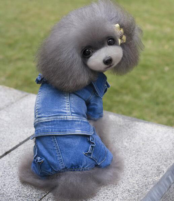Pet dog cat autumn winter jumpsuits apparel doggy cool fashion denim tracksuits costume puppy overcoat dogs cats suit 10pcs