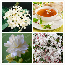 promotion Beautiful Chinese jasmine flower seed genuine white rare flower tea fragrant plant in bonsai DIY Home Garden 20pcs/bag(China)