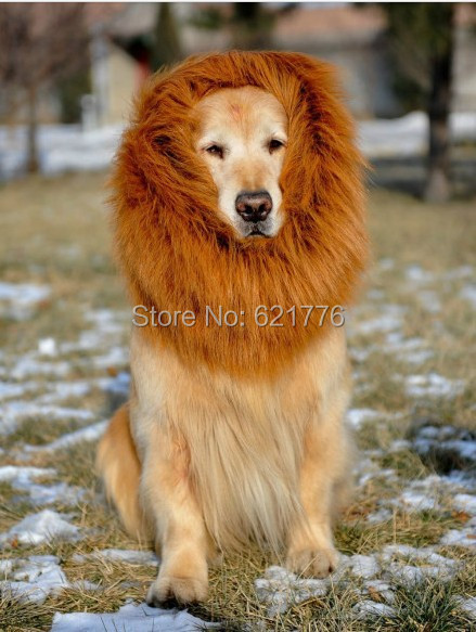 Lion Mane Dog Collar