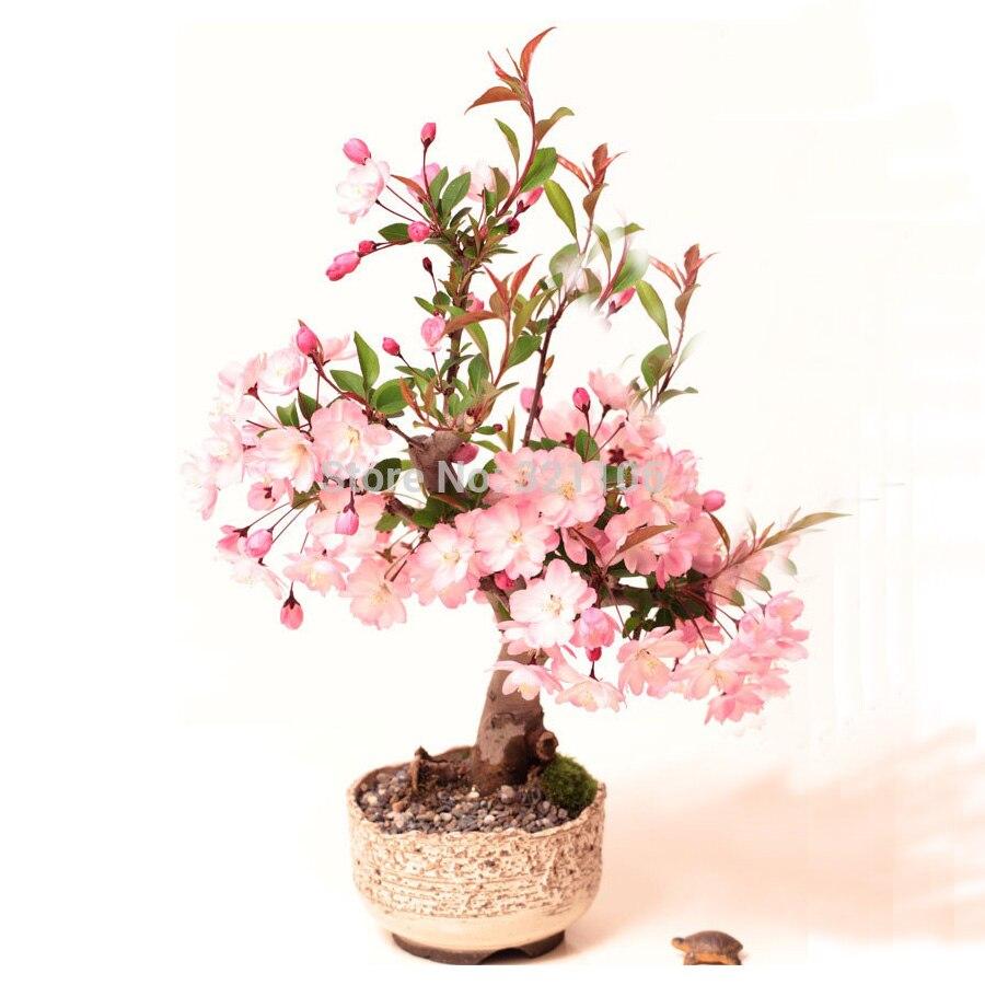 Цветы сакура живой купить, сентября цветочных салонах