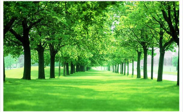 Popular green tree wallpaper buy cheap green tree for Cheap green wallpaper