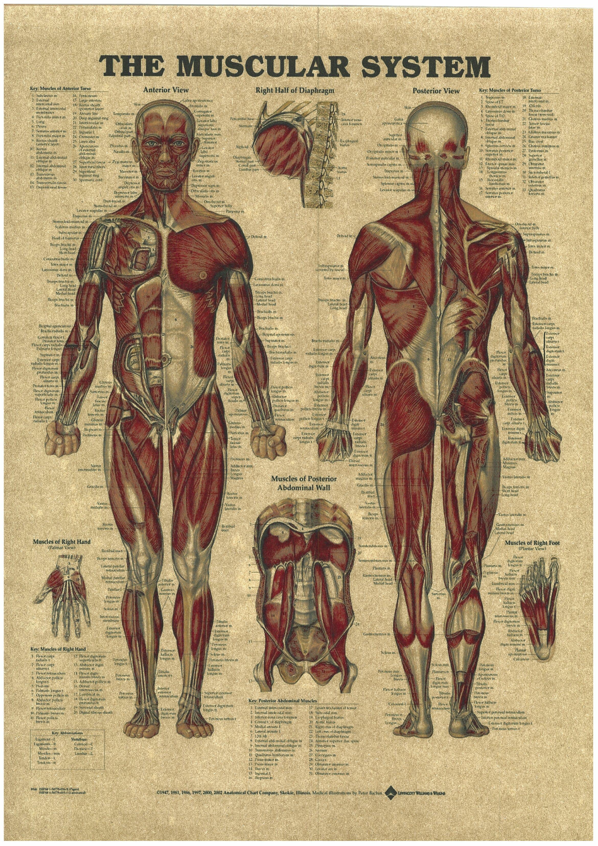Human Anatomy Retro Medicine Posters Kraft Paper Painting Wall ...