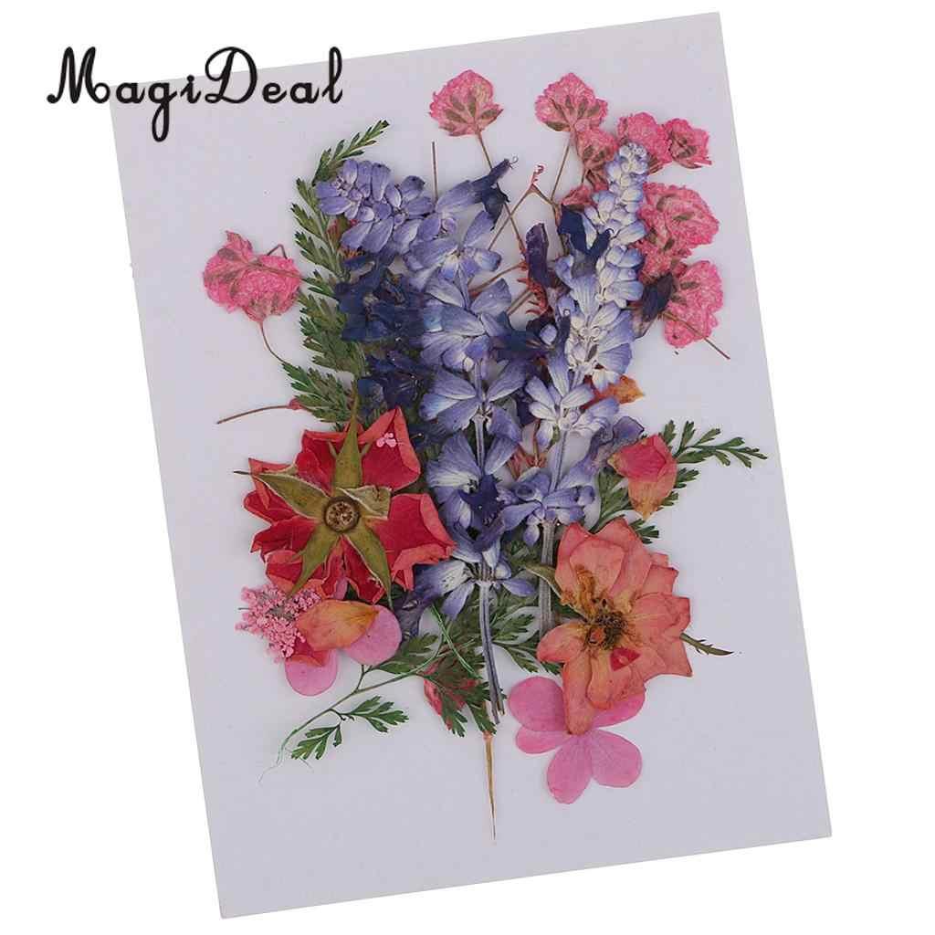 Multiple Beautiful Real Pressed Flower Dried Flowers Press Leaves