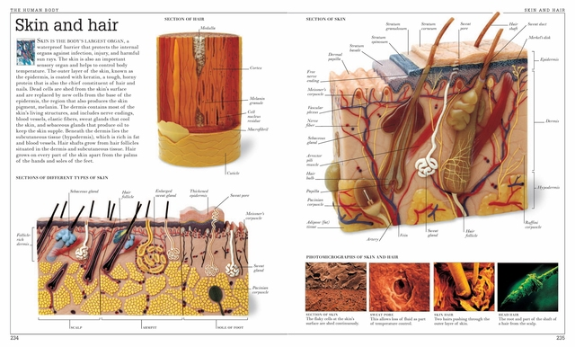 Vintage Human Anatomy Encyclopedia Poster Skin And Hair Classic