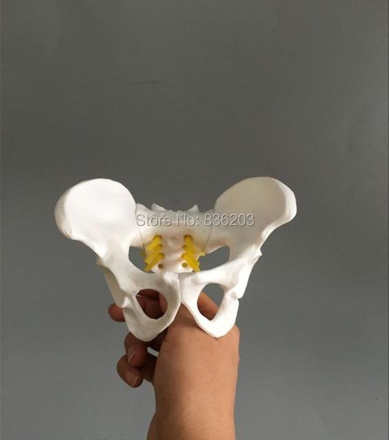 Mini Weibliche anatomie becken becken skeleton kehle Anatomie ...