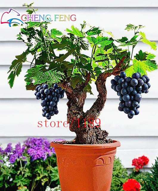 50pcs Very Rare Gold Finger Grape Vine plants Advanced Fruit bonsai Natural Growth Grape Delicious Fruit Plants For Home Garden
